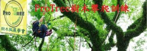 treeclimbbanner