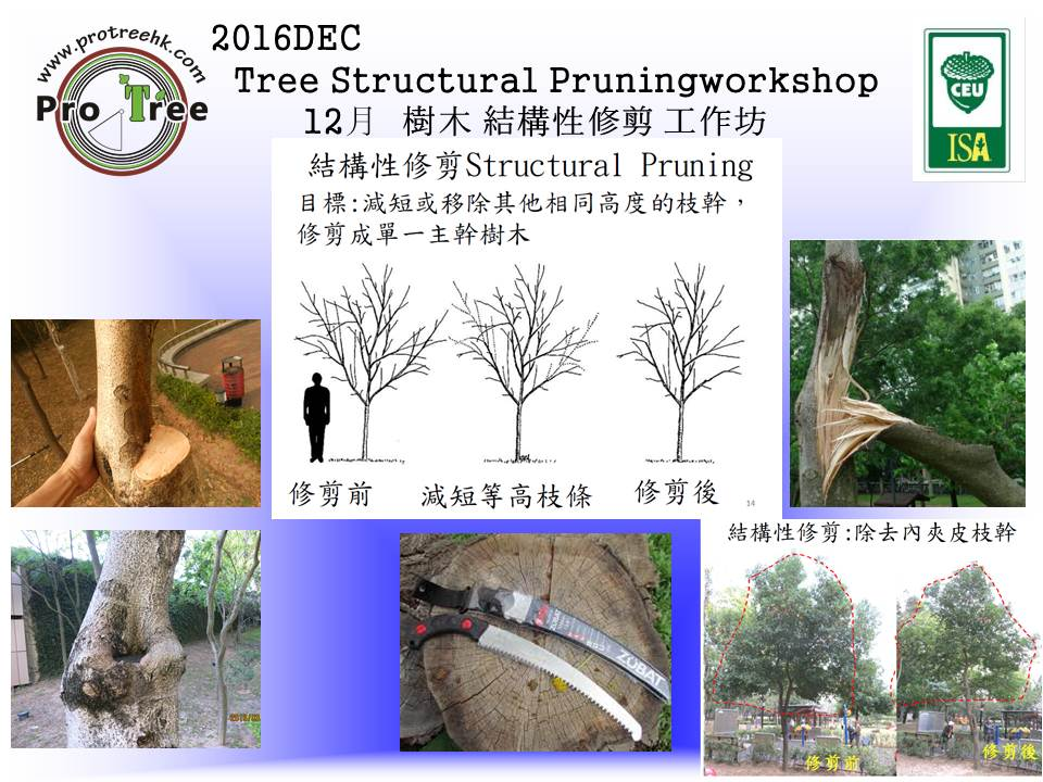 for-2016dec-tree-structual-pruning