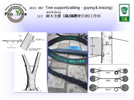 for-2016dec-tree-support