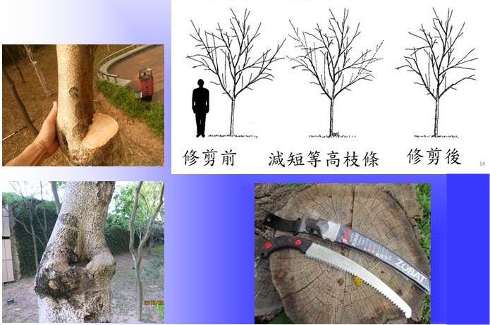x_pruning